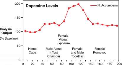 does adderall decrease dopamine levels