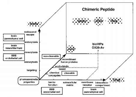 Drug Induced Hypoglycemia Peptide