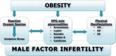 Infertility Obesity Mechanism