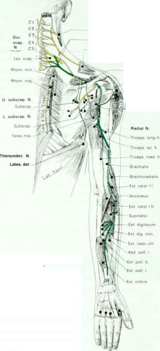 Nerve Point Image