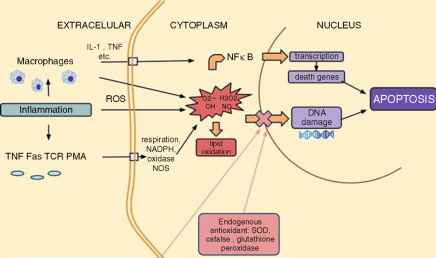 Oxidative Stress And Female Infertility