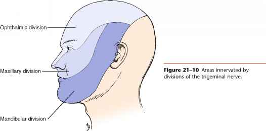 Facial Nerve Distribution