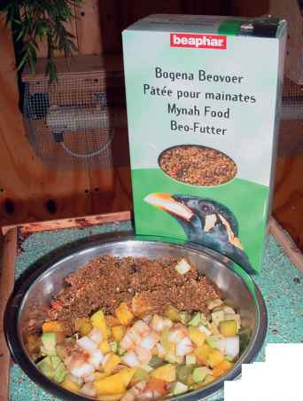 Analisis Feed Mynah Bird