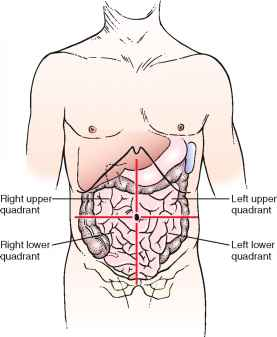 Structure and physiology physical diagnosis stomach quadrants ccuart Images